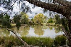 Сценарный пруд Стоковое Фото
