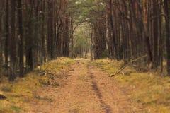 Сценарный путь соснового леса Стоковая Фотография RF