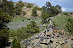 Сценарный скалистый ландшафт Стоковое Изображение RF