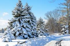 Сценарный снег покрыл сосны стоковая фотография rf