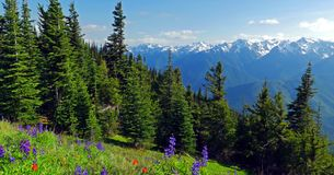 Сценарный штат Вашингтон природы - след холма урагана, олимпийский национальный парк стоковые фотографии rf