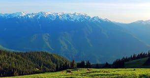 Сценарный штат Вашингтон природы - след холма урагана, олимпийский национальный парк стоковые изображения