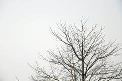Сцена ландшафта дерева зимы сиротливая Стоковая Фотография