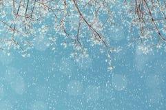 Сцена ландшафта зимы - снежные ветви дерева зимы на предпосылке солнечного неба под снежностями Стоковое Изображение