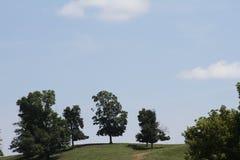 Сцена вершины холма с деревьями Стоковые Фото