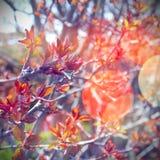 Сцена весны Стоковые Изображения