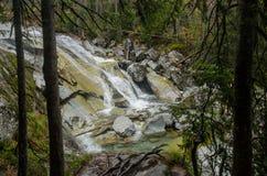 Сцена водопада покрытая с соснами - в горах - Европа, высокое Tatras стоковая фотография