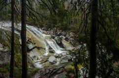Сцена водопада покрытая с соснами - в горах - Европа, высокое Tatras стоковое изображение rf