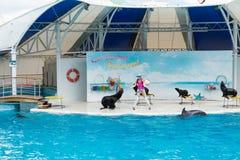Сцена выставки дельфина Стоковые Фото