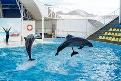 Сцена выставки дельфина Стоковое Изображение