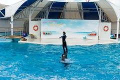 Сцена выставки дельфина Стоковое Изображение RF