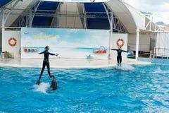 Сцена выставки дельфина Стоковое Фото
