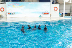 Сцена выставки дельфина Стоковые Изображения