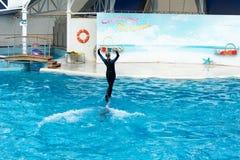 Сцена выставки дельфина Стоковая Фотография
