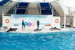 Сцена выставки дельфина Стоковое фото RF