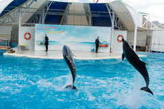 Сцена выставки дельфина Стоковые Фотографии RF