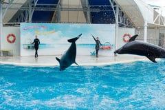 Сцена выставки дельфина Стоковые Изображения RF