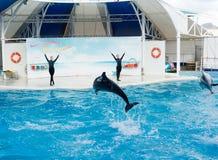 Сцена выставки дельфина Стоковая Фотография RF
