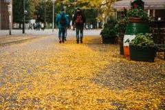Сцена города осени Селективный фокус на желтой листве на дороге Прогулка людей рядом с кафем на заднем плане Стоковое Изображение