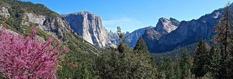 Сцена горы Yosemite Стоковые Фото