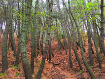 Сцена леса стоковая фотография