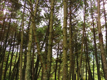 Сцена леса стоковые изображения rf