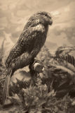 Сцена живой природы - сцена живой природы Стоковые Фотографии RF