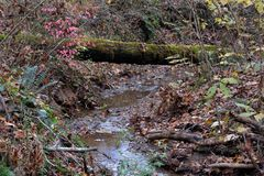 Сцена заводи с упаденным деревом Стоковая Фотография RF
