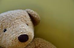 Сцена заполненного медведя стоковое изображение