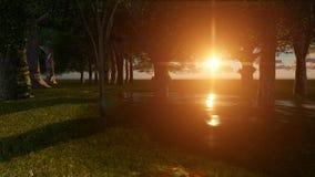 Сцена захода солнца природы в лесе Стоковая Фотография RF