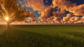 Сцена захода солнца природы в зеленой земле Стоковые Изображения