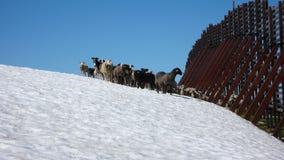 Сцена зимы Альпов швейцарца Стоковые Фотографии RF