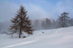 Сцена зимы в горе ` s зимы стоковая фотография rf