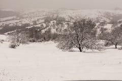 Сцена зимы и дерево грецкого ореха Стоковая Фотография RF