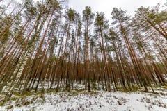 сцена зимы сельская при ветви снега и дерева достигая для Стоковые Изображения