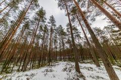сцена зимы сельская при ветви снега и дерева достигая для Стоковое фото RF