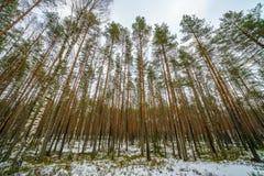 сцена зимы сельская при ветви снега и дерева достигая для Стоковая Фотография RF