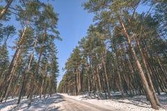 сцена зимы сельская при ветви снега и дерева достигая для Стоковое Изображение RF