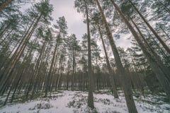сцена зимы сельская при ветви снега и дерева достигая для Стоковые Фото