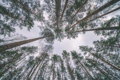 сцена зимы сельская при ветви снега и дерева достигая для Стоковые Фотографии RF