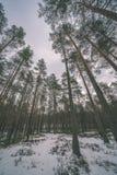 сцена зимы сельская при ветви снега и дерева достигая для Стоковое Изображение