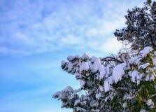 Сцена зимы с ветвями дерева нагрузила с снегом Стоковое фото RF