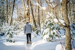 Сцена зимы с покрашенными кленом и treesin Квебеком c Christmass стоковое изображение