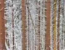 Сцена зимы с снежными хоботами Стоковое фото RF