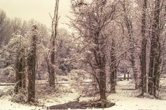 Сцена зимы чуть-чуть ветвей дерева покрытых с снегом в парке Потомак, Вирджинии Стоковая Фотография RF