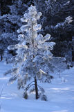 Сцена зимы. Стоковые Изображения