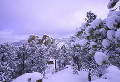 Сцена зимы Стоковое фото RF
