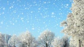 Сцена зимы сток-видео