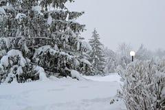 Сцена зимы Стоковая Фотография