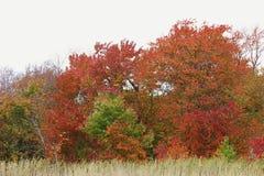 Сцена листьев осени листопада Стоковые Изображения RF